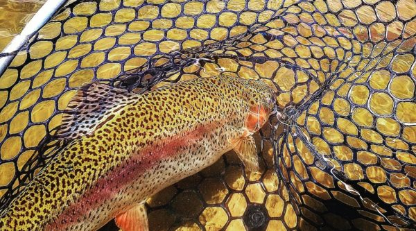 dvorak expeditions daily fishing report